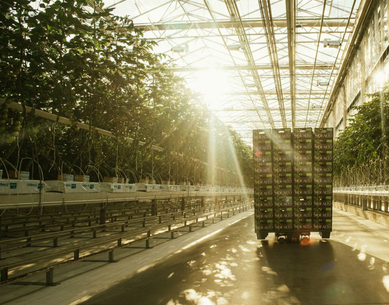 我的夏天品牌新鲜西红柿蔬菜包装设计-上海农产品包装设计公司