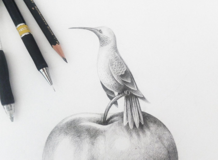 Kingswood苹果酒包装标签设计-小鸟画