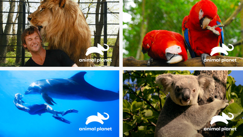 Haviv的动物星球电视频道新logo设计,与地球同在的大象